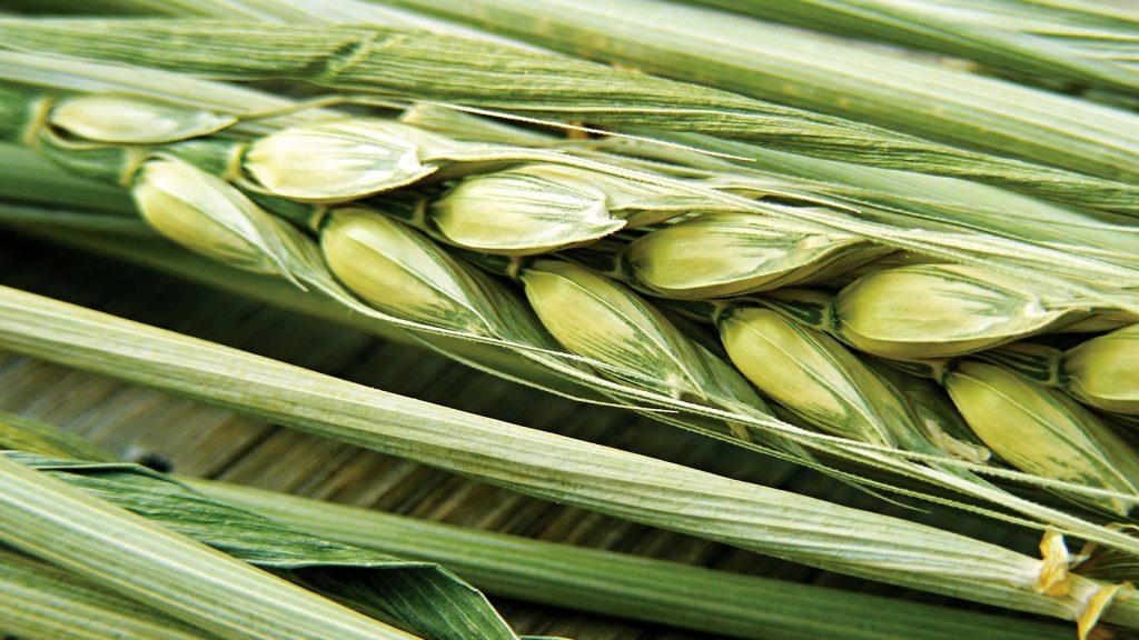 Organik gıda üretimi iklim değişikliğini nasıl etkiler?