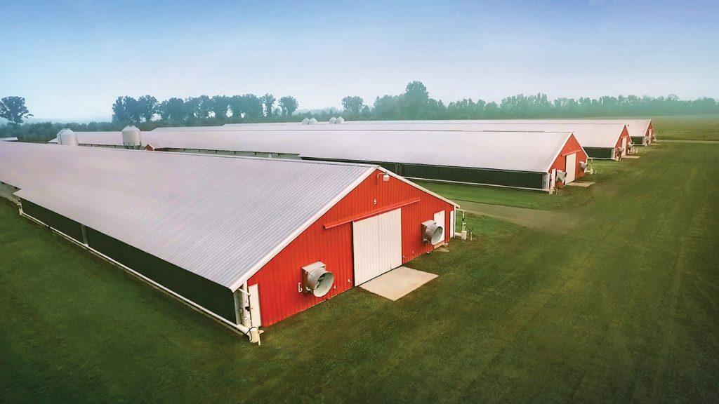 Sanderson Farms 17,8 milyon $ zarar bildirdi