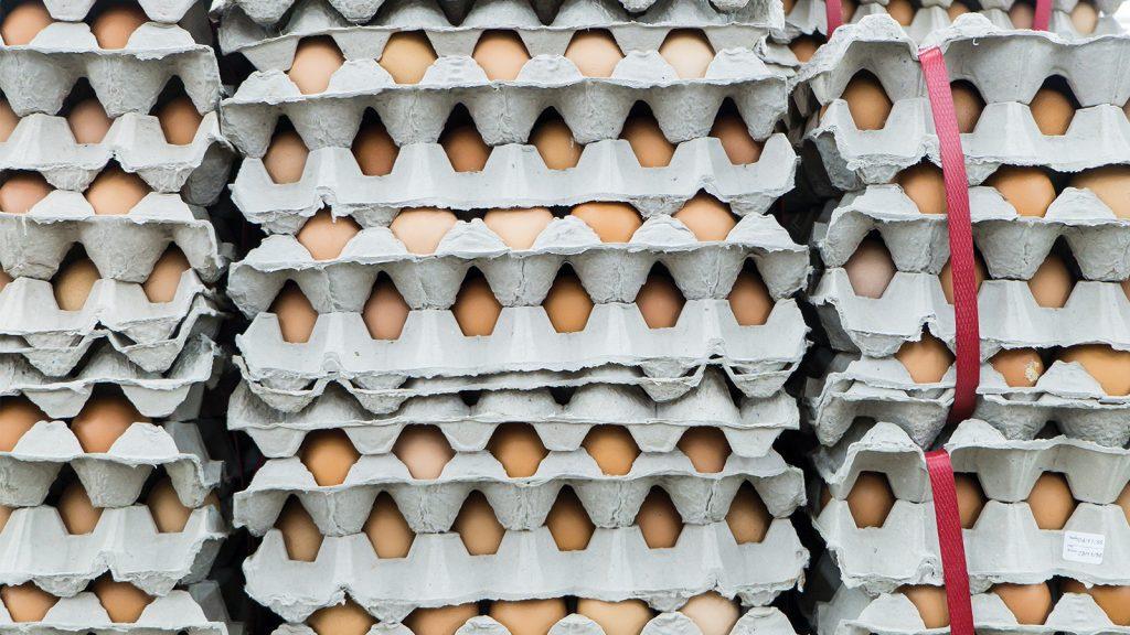 TÜİK verilerine göre, tavuk yumurtası üretimi 1,6 milyar adet olarak gerçekleşti