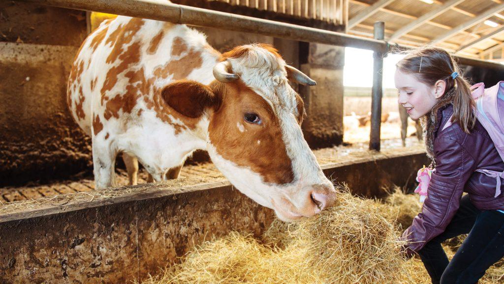 Yeni bitki geni, hayvan besleme için potansiyel yararlar barındırıyor
