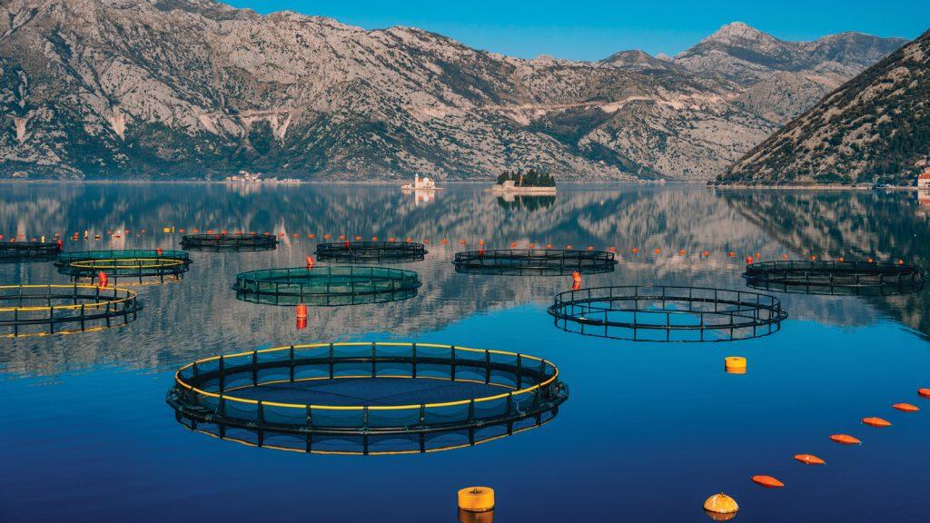 Aqua-kültür yem sektörü çalışmaları, saktörün geleceği için umut vaat ediyor