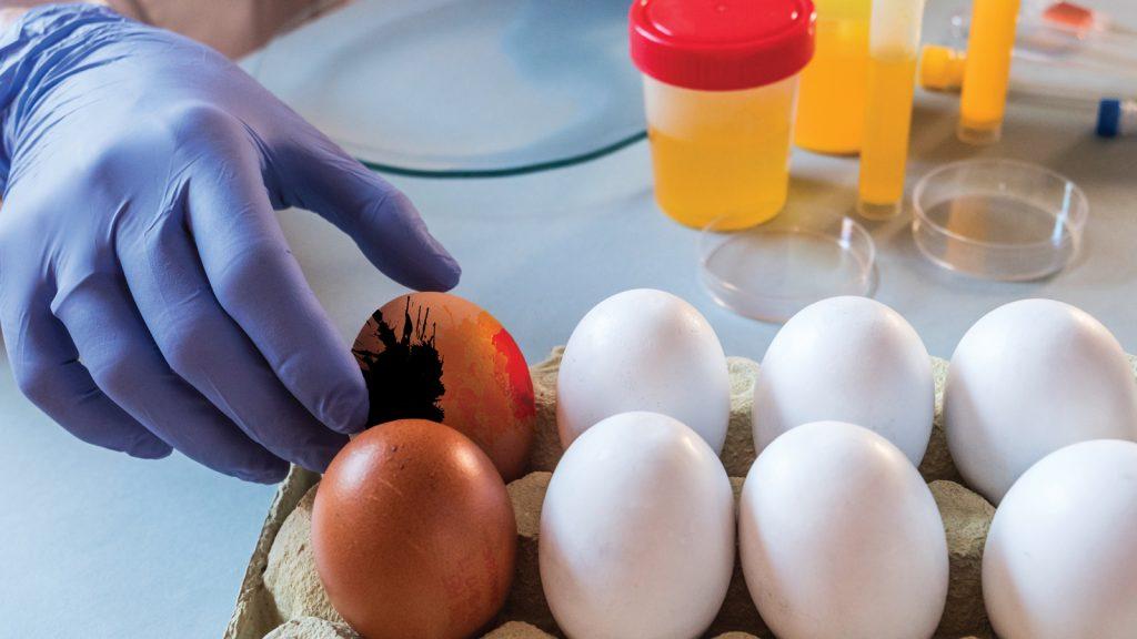 Belçika'da bir kriz daha: Yumurtaların dioksin ile kontamine olduğu tespit edildi!