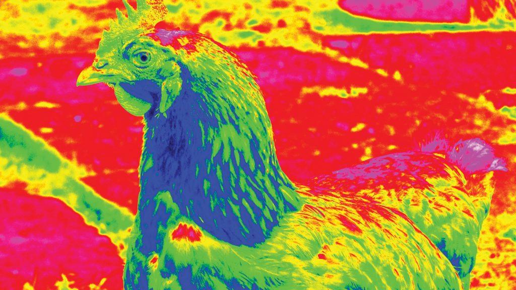 Kanatlı hayvan besleme davranışlarını tanımlamak için kızılötesi kamera