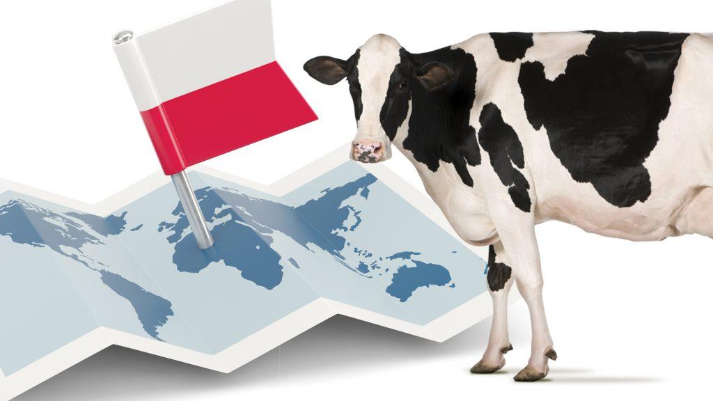Polonya, 5 yıl üst üste AB'nin en büyük karma yem üreticisi oldu