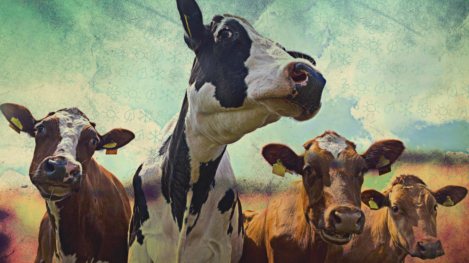 Hayvancılığın küresel iklim üzerine etkileri