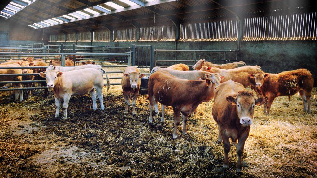 Sığırlarda parazit kontrolü gelişmeleri