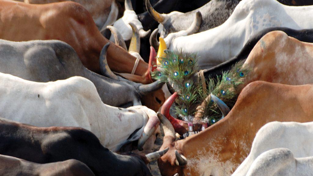 Hindistan süt ihracatında %126 büyüme kaydetti