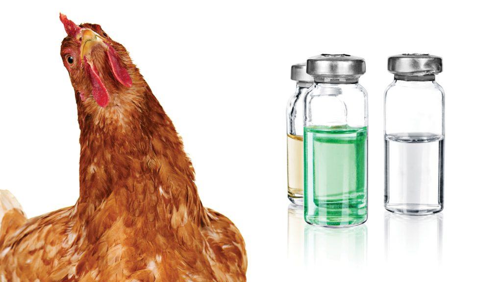 Aşılama olmadan hayvan sağlığı olmaz