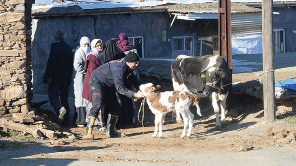 Gönüllü veteriner hekimler deprem mağduru hayvanlara hizmet etti
