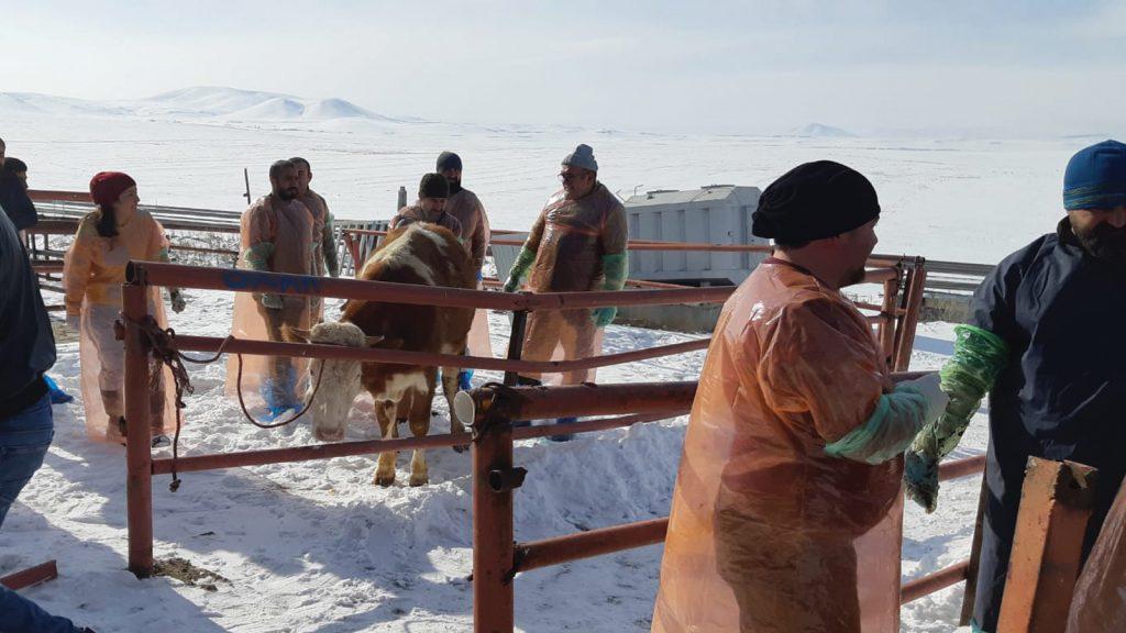 Kars Bölgesi VHO, Bakanlık onaylı suni tohumlama kursu düzenledi