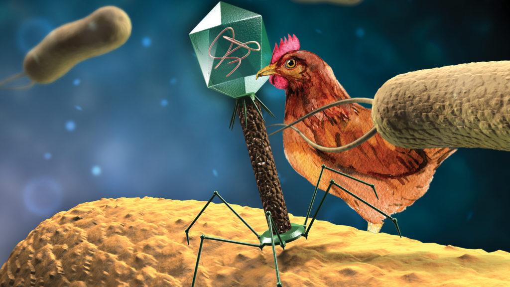 Bakteriyofajlar yemde antibiyotiklere alternatif sunabilir