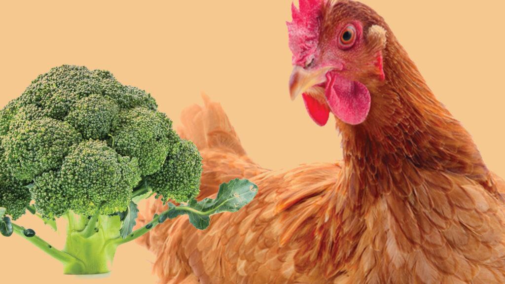 Brokolinin antimikrobiyal ve antioksidan faydaları