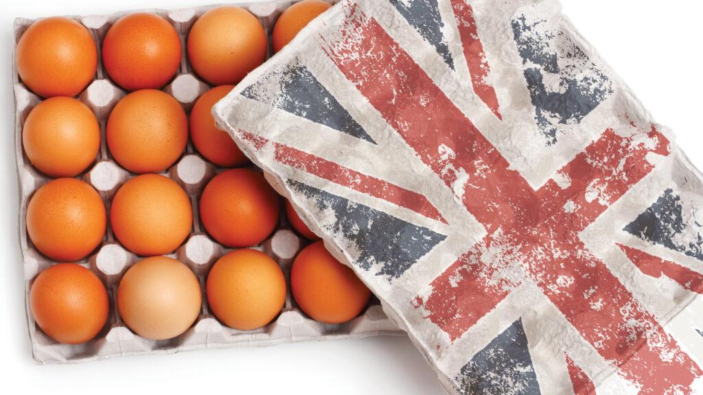 İngiltere'de yeni yumurta akademisi açıldı