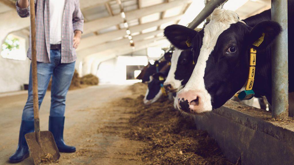 Kemirgenlerin süt işletmesi ekonomisine etkileri