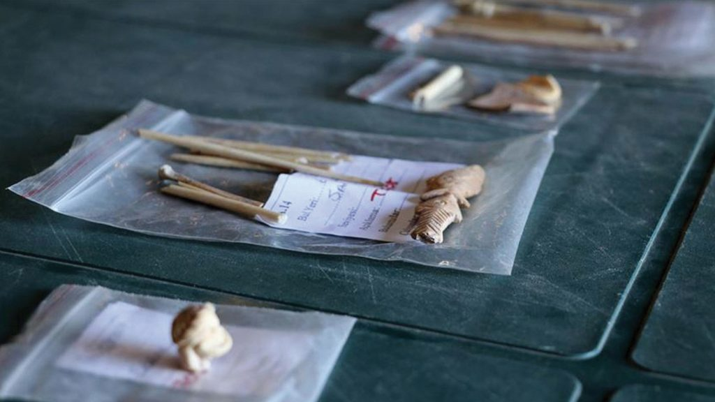 Aigai Antik Kenti'nden çıkan kemikler keçilerin DNA'sına ışık tutacak