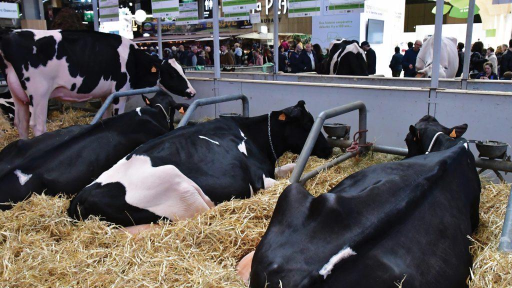 2021 yılında en fazla fuar tarım ve hayvancılık sektörü için!