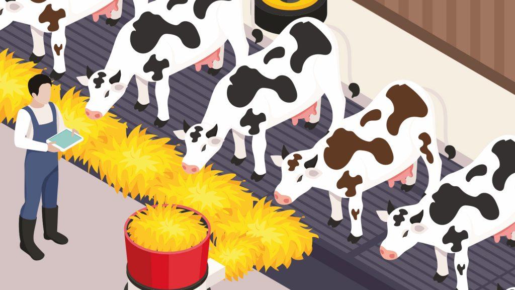 Süt ineği yemine organik selenyum takviyesi
