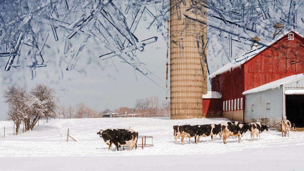 Süt inekleri için kışa hazırlık