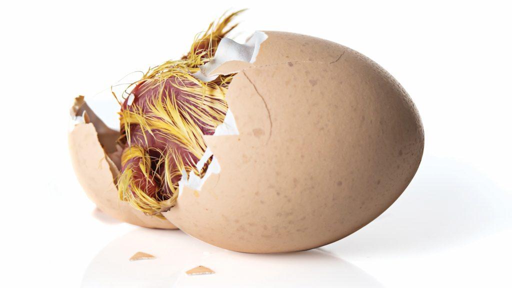 Embriyonel gelişme ve yumurta içi beslenme