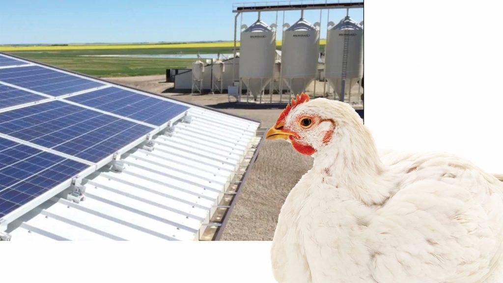 Net sıfır enerjili kanatlı kümesleri hakkında düşünme zamanı