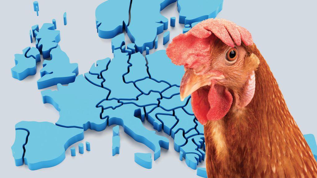 Avrupa'da kuş gribi vakaları kontrol altında